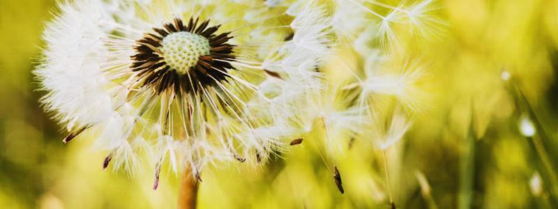 Alergias-interior